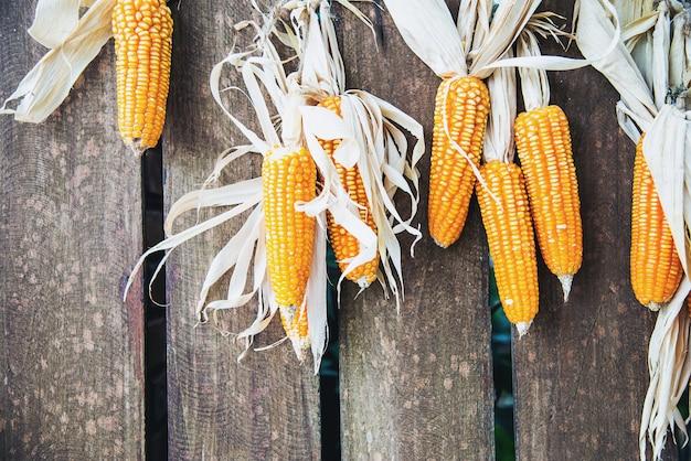 Fundo de decoração de milho seco Foto gratuita