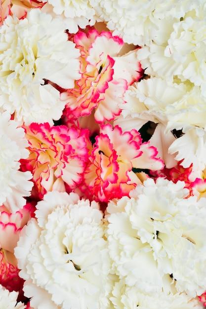 Fundo de flores de cravo-de-rosa e branco Foto gratuita