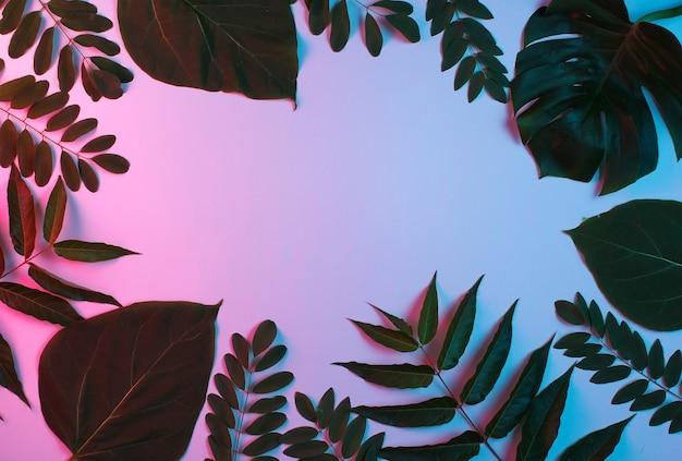 Fundo de folha verde tropical com luz gradiente de néon rosa azul. Foto Premium