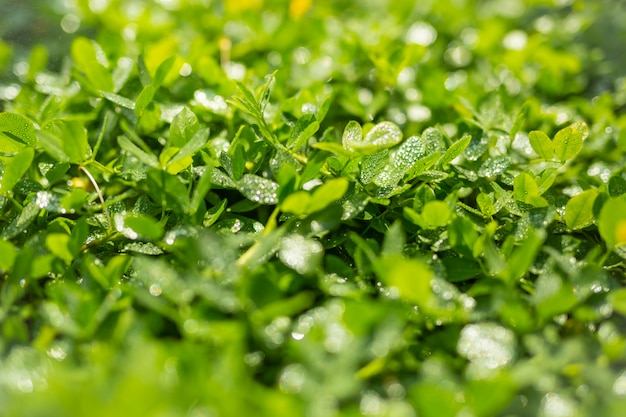 Fundo de folha verde. Foto gratuita