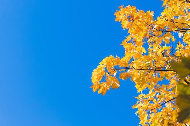 Fundo de folhas caídas de outono Foto Premium