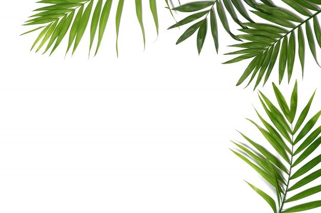Fundo de folhas de palmeira Foto Premium
