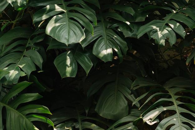 Fundo de folhas verdes tropicais Foto gratuita