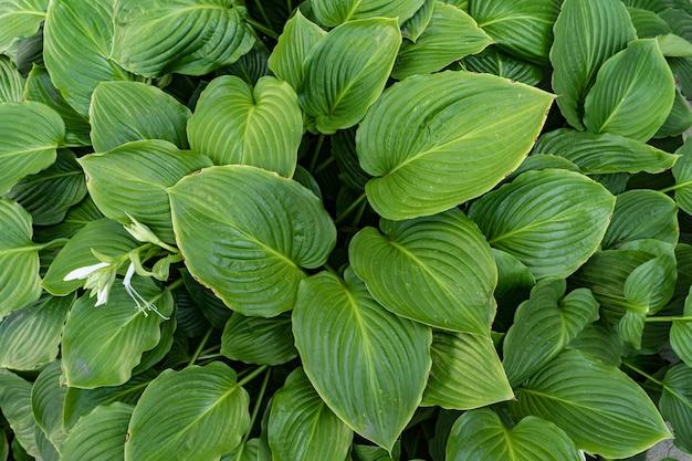 Fundo de folhas verdes, Foto gratuita