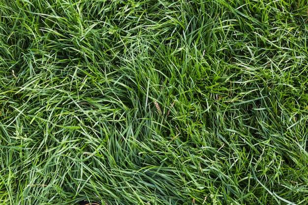 Fundo de grama verde fresca Foto gratuita