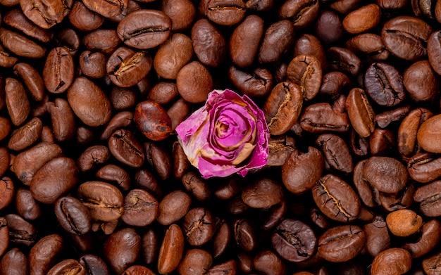 Fundo de grãos de café torrados com botão de rosa na vista superior meio Foto gratuita