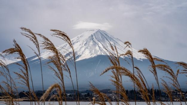 Fundo de montanha fuji com a grama de prado dourado Foto Premium