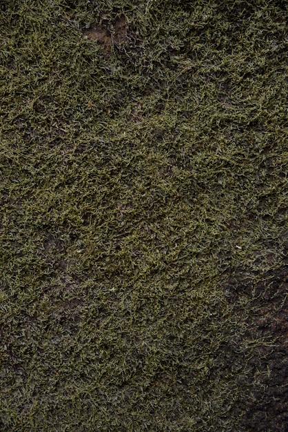 Fundo de musgo na natureza Foto Premium