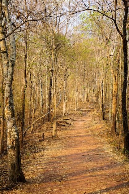 Fundo de natureza de caminho de floresta seca Foto Premium