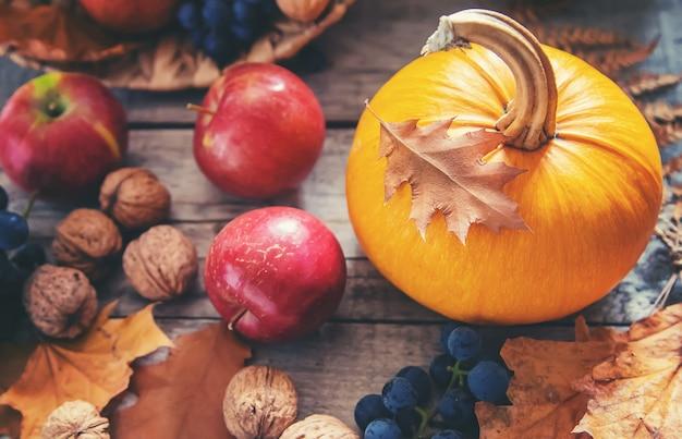 Fundo de outono com abóbora. dia de ação de graças. foco seletivo. Foto Premium
