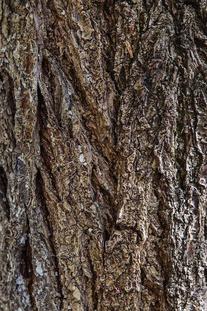 Fundo de textura de casca de árvore. padrão de textura de tronco de árvore de madeira velha Foto Premium
