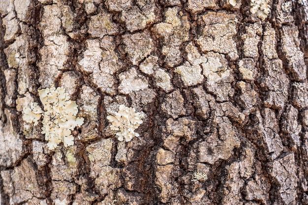 Fundo de textura de casca de árvore Foto Premium