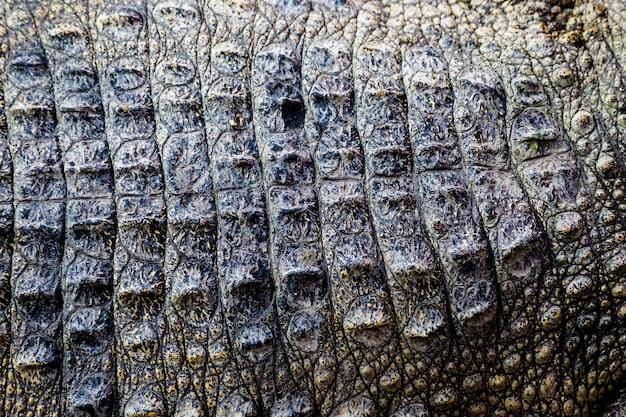 Fundo de textura de couro de crocodilo Foto Premium