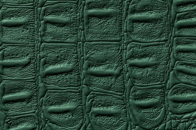 Fundo de textura de couro verde escuro, pele de réptil Foto Premium
