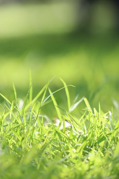 Fundo de textura de grama Foto Premium