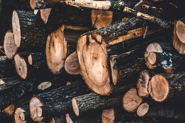 Fundo de toco de árvore Foto Premium