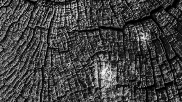 Fundo de tronco texturizado de tronco de árvore Foto gratuita