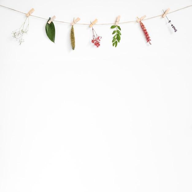 Fundo decorativo com folhas na linha de roupas Foto gratuita
