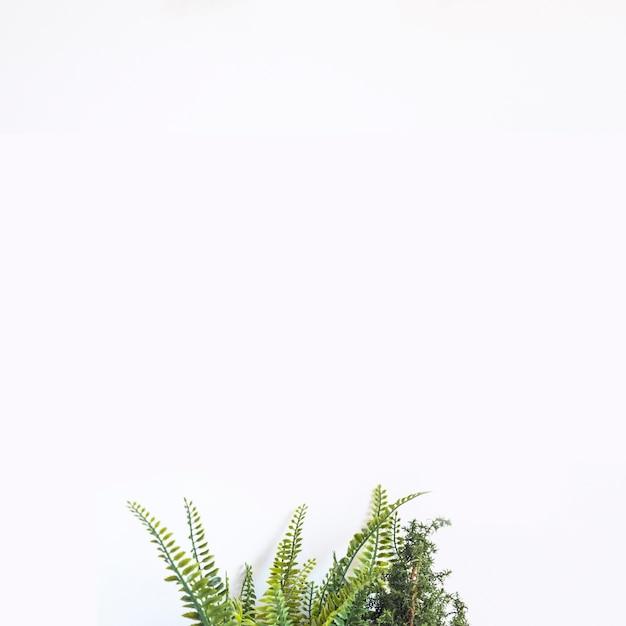 Fundo decorativo com planta no fundo Foto gratuita