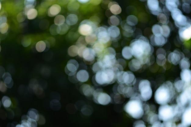 Fundo desfocado da natureza Foto Premium