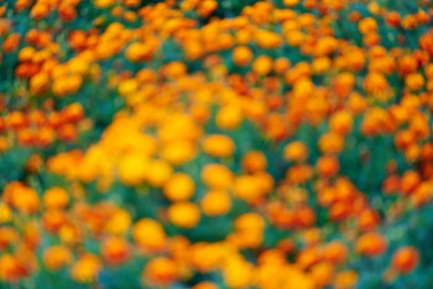 Fundo desfocado de flores na grama verde. Foto Premium
