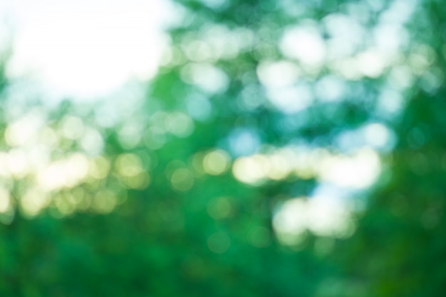 Fundo desfocado verde. bokeh verde fora do fundo da folha do foco. bio fundo verde fresco borrou o fundo. Foto Premium