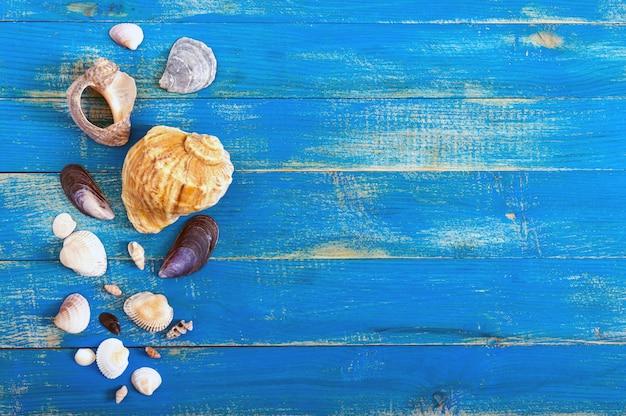 Fundo do mar tropical. conchas diferentes nas placas azuis, vista superior. espaço livre para inscrições. tema de verão. Foto Premium