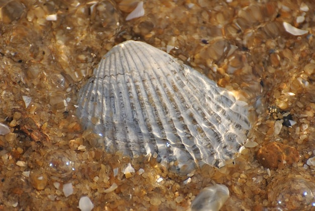 Fundo do Seashell do escudo do mar padrão de conchas Foto gratuita