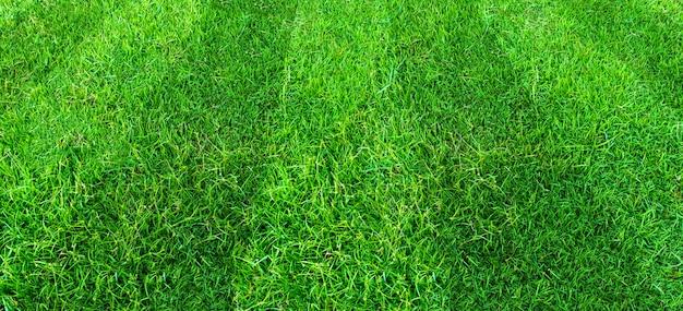 Fundo do teste padrão do campo de grama verde para esportes do futebol e do futebol. fundo de textura de gramado verde. Foto Premium