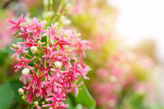 Fundo flor vermelha. Foto gratuita