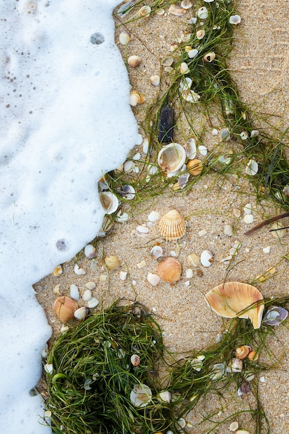 Fundo natural de diferentes conchas e algas na praia de areia molhada. vista de cima. moldura vertical Foto Premium