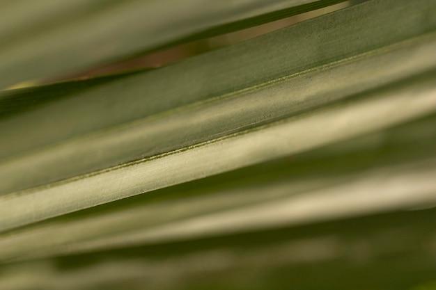 Fundo orgânico de folhas verdes Foto gratuita