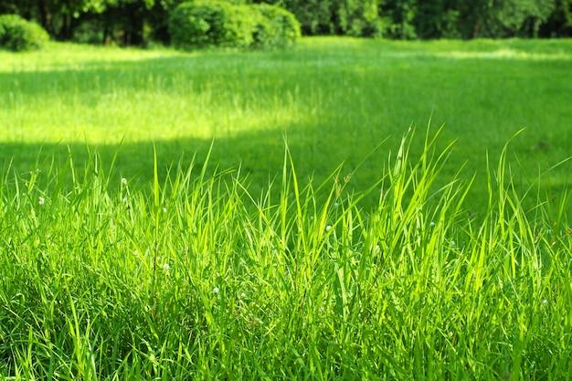 Fundo verde grama verde Foto Premium