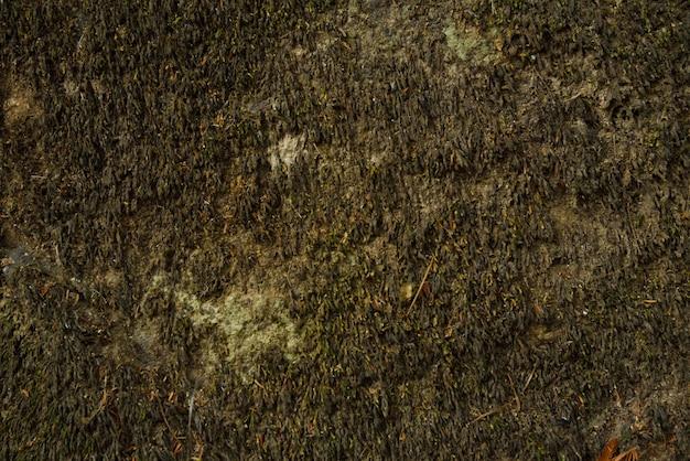 Fundo verde musgo Foto Premium