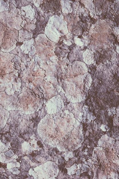 Fungo e líquen em rocha Foto gratuita