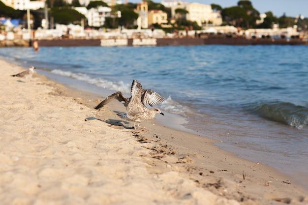 Gaivota na costa no sul da frança, antibes Foto Premium