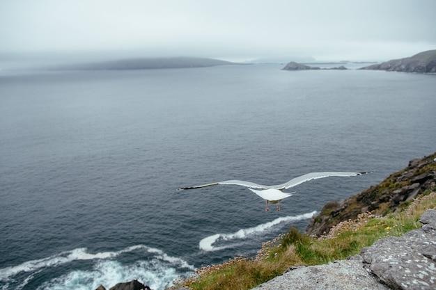 Gaivota voando sobre o oceano, dingle, no condado de kerry, na irlanda Foto Premium