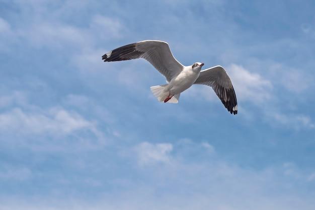 Gaivota voando Foto Premium