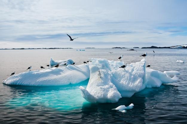Gaivotas na antártica Foto Premium