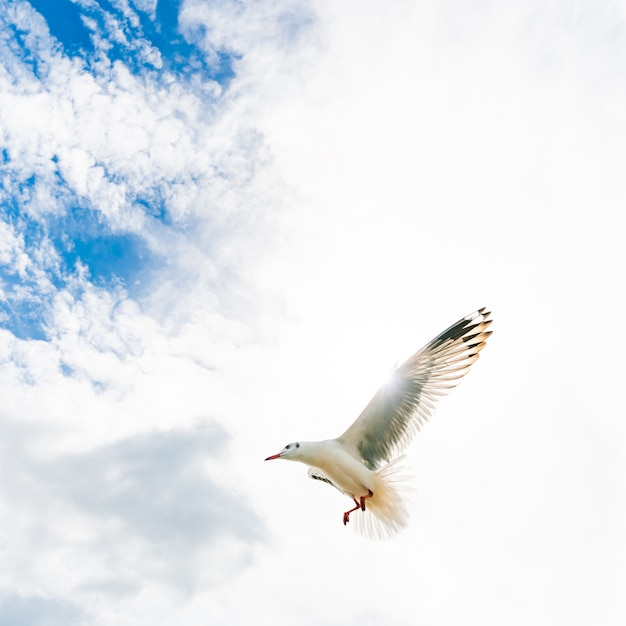 Gaivotas voando na praia tropical Foto Premium