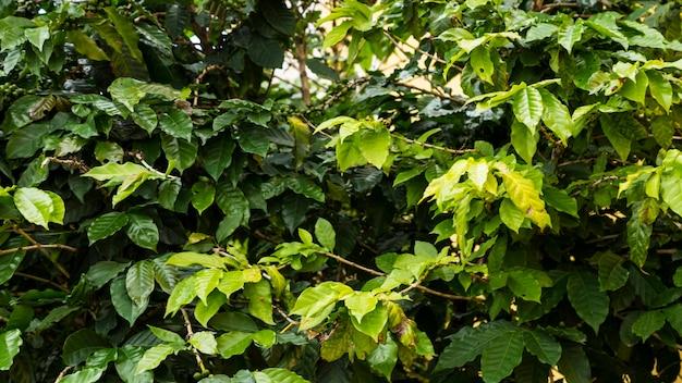 Galho de árvore verde molhado durante o tempo chuvoso na floresta tropical Foto Premium