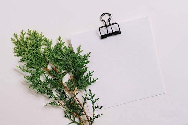 Galho de cedro com papel em branco com clipe isolado no fundo branco Foto gratuita