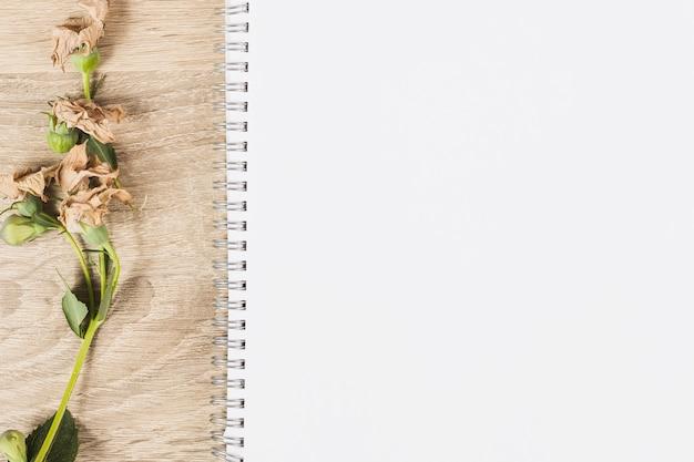 Galho de flores secas em fundo branco em branco de madeira e espiral Foto gratuita