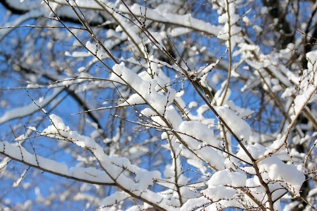 Galhos de árvores cobertos de neve no inverno Foto Premium