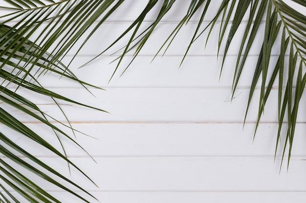 Galhos de plantas verdes em madeira branca Foto gratuita
