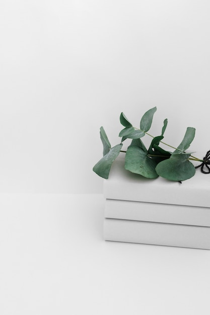 Galhos verdes no livro empilhado isolado no pano de fundo branco Foto gratuita