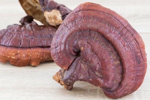 Ganoderma lucidum mushroom no fundo de madeira Foto Premium
