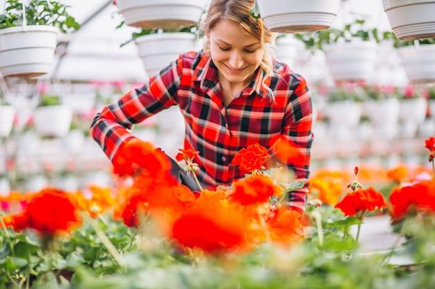 Gardiner mulher cuidar de flores em uma estufa Foto gratuita