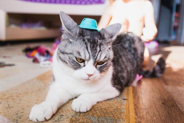 Garota brincando com gato, animal de estimação e sua pequena amante Foto Premium