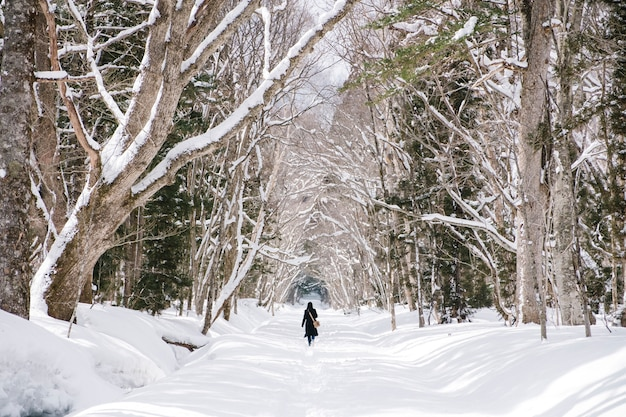 Garota na floresta de neve no togakushi shrine, japão Foto gratuita